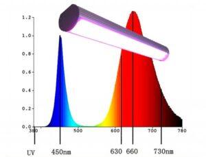 Фітолампи. Освітлення теплиць . Спектр фітолампи.